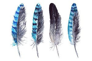 Watercolor black blue jay feathers