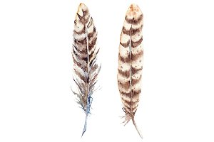 Watercolor brown beige feather set