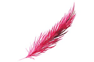 Watercolor pink bird feather