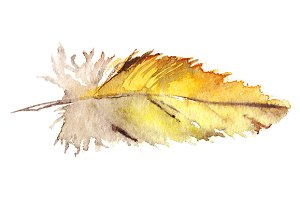 Watercolor yellow parrot feather