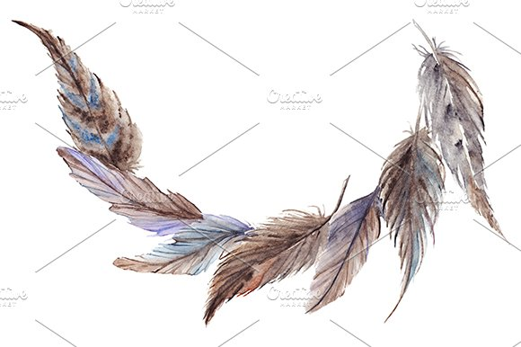 Watercolor Gray Grey Blue Brown Feathers Composition Set Isolated