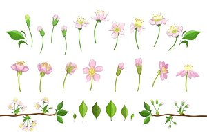 Cherry Blooming Process Illustration