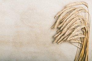 Ripe wheat on grey rustic background