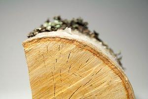 Birch log, increased