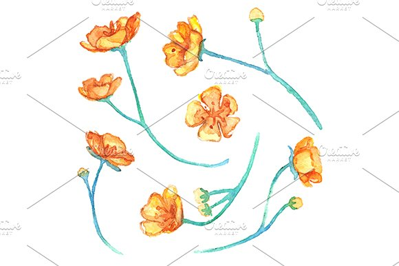 Watercolor Yellow Buttercup Flowers Isolated Vector Set