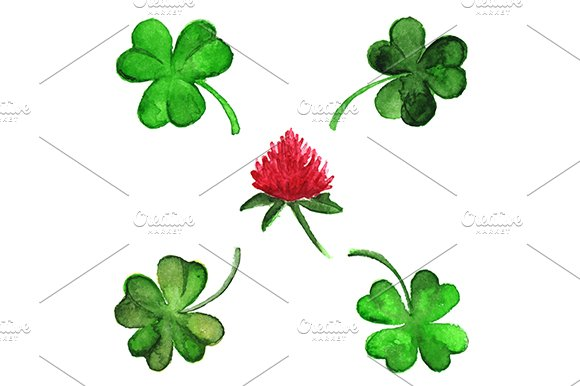 Watercolor Vector Clover Shamrock Flower Set Isolated