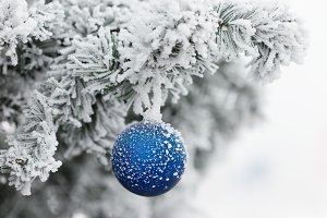 Blue ball on branch of a Christmas tree in frost and snow