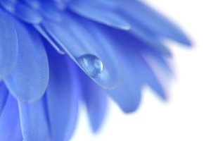 Blue Flower with water drop