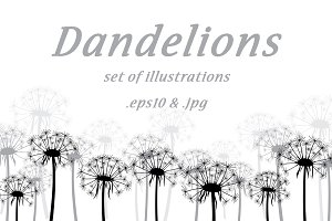 Dandelions: set of illustrations