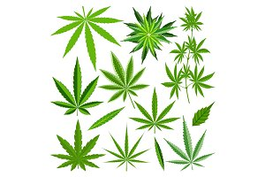 Marijuana leaf vector set