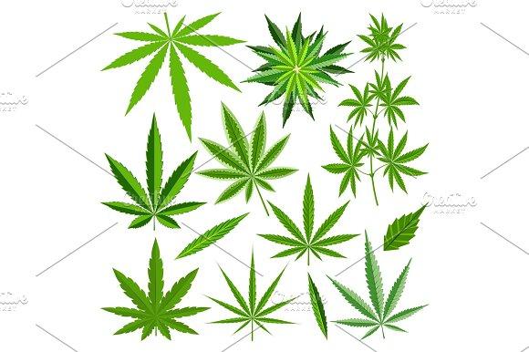 Marijuana Leaf Vector Set