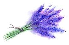Watercolor lavender bouquet sketch