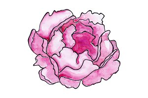 Watercolor crimson peony flower