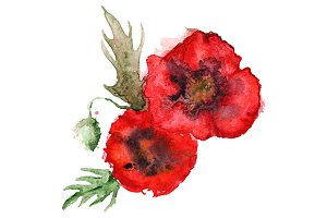 Watercolor red poppies composition