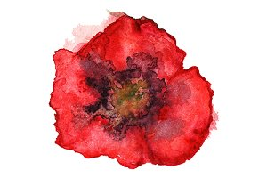 Watercolor red poppy flower
