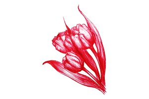 Red tulips bouquet sketch vector