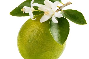 Lime with bloom