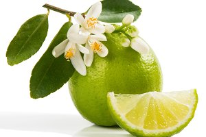 Organic lime and bloom