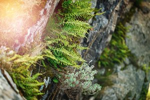 Nature background with fern