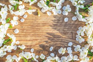 Spring frame with cherry flowers on old wooden background with free space