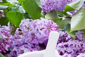 Lilac flowers and sugar