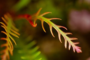 Tropical Green and Red Leaves