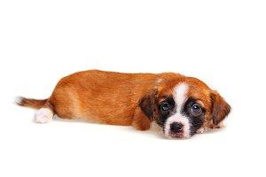 Cute puppy closeup