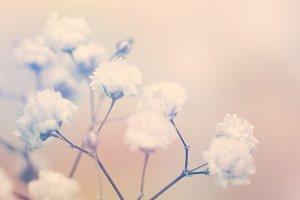 White flower on blur