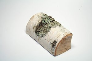 Reversed birch log, top view