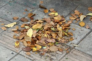 Leaves and dry waste