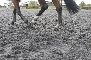 Foot of horse running on the sand