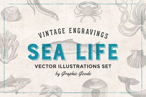 Fishes & Sea Life Engravings Set