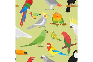 Cartoon parrot vector seamless pattern