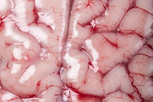 Closeup from a lamb brain showing its texture