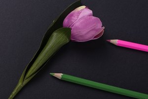 Pink flower next to two pink and green colored pencils on black background