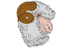 Merino Ram Sheep Head Drawing
