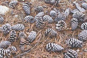 needles and pinecones