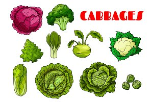 Vegetable cabbage isolated vector icons