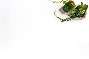 Styled Stock Photography Succulents