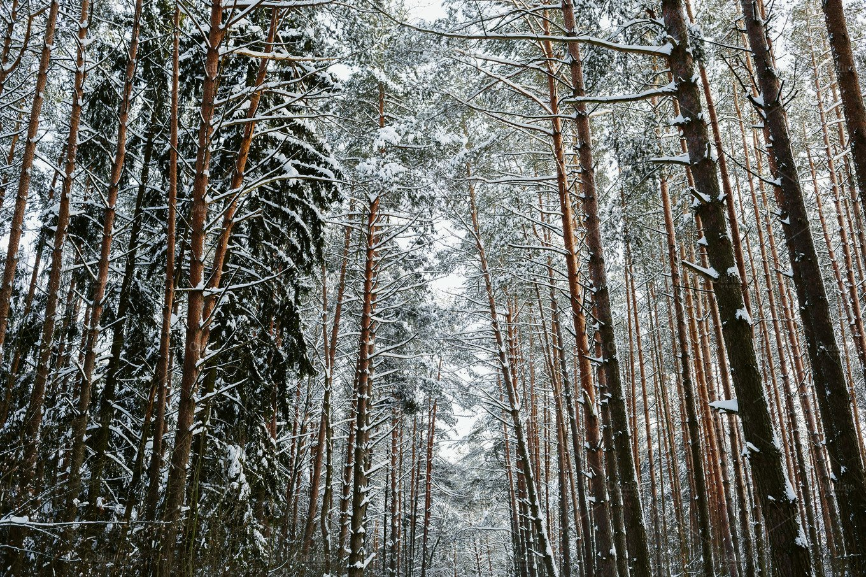 Winter Forest Background Nature Photos Creative Market