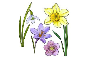 Set of summer flowers, daffodil, snowdrop, crocus, sketch vector illustration
