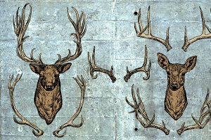 Deer and horns set.