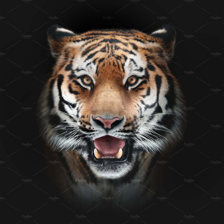 Tiger Face On Black