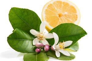 Lemon fruit and lemon blossom.