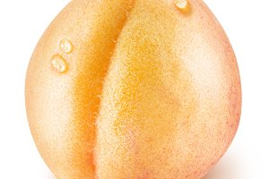apricot fruit with water drops.
