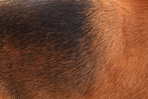 Brown dog wool close up
