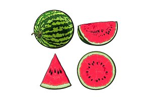 Whole, half, quarter and slice of ripe watermelon, sketch illustration