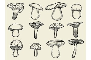 vector illustrations of mushrooms
