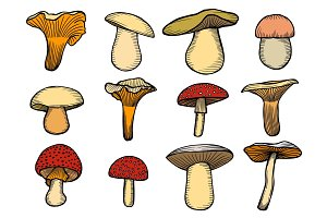 Vector illustration with set of mushrooms
