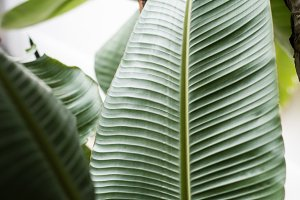 Tropical Greenery Stock Photo